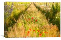Converging tracks in a flower meadow, Canvas Print