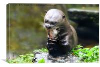 Otter by the river, Canvas Print