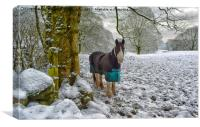 Horse and snow, Canvas Print