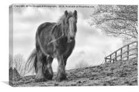 Horse in birtle countryside, Canvas Print