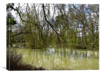Looking through the Willow Tree, Canvas Print