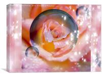 Rose in a  Bubble, Canvas Print