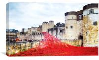 Tower of London. Poppies., Canvas Print