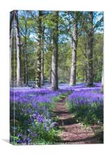 Bluebell Woods at Blickling, North Norfolk, Canvas Print