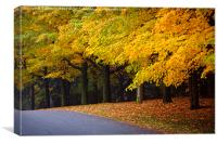 Fall road with colorful trees., Canvas Print