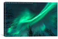 Northern Lights over Trees, Canvas Print