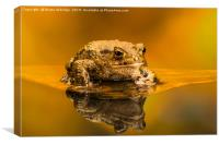 Common toad (Bufo Bufo), Canvas Print