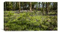 Burton Mere Bluebell Wood, Canvas Print