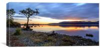 The Lone Tree: Milarrochy Bay, Loch Lomond, Canvas Print