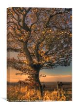 Autumn Tree, Canvas Print