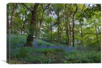 Bluebell forest          , Canvas Print