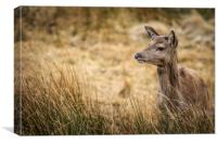 Red Deer             , Canvas Print