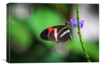Postman butterfly , Canvas Print