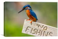 kingfisher (Alcedo atthis), Canvas Print