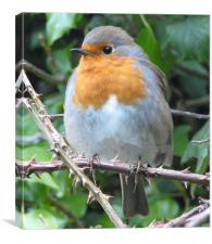 Robin in waiting, Canvas Print