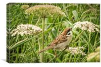 Tree Sparrow at Bempton, Canvas Print