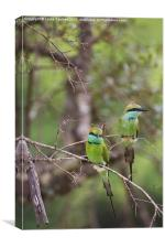 A Pair of Bee - Eaters, Canvas Print