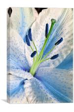 Blue Lily Macro, Canvas Print