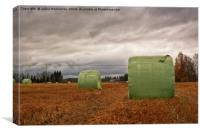 Hay Bales Wrapped In Plastic On The Autumn Fields, Canvas Print