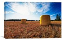 Yellow Bales On The Early Autumn Fields, Canvas Print