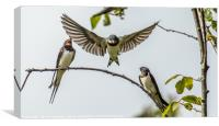 Swallows, Canvas Print
