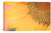 Toasted Sunflower, Canvas Print
