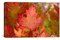 Canadian Fall Colours, Canvas Print