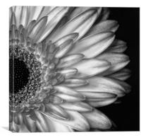 Gerber Daisy Black and White, Canvas Print