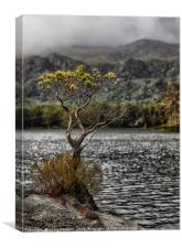 The Lone Tree of Loch Maree, Canvas Print