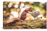 Shopping Red Squirrel, Canvas Print