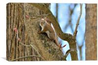Red-tailed Squirrel, Canvas Print