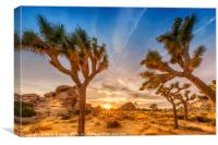 Gorgeous Sunset at Joshua Tree National Park, Canvas Print