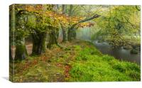 Autumn Ancients at Golitha Falls, Canvas Print