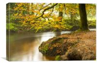 Autumn at Golitha Falls, Canvas Print