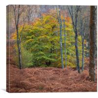 Colours in the woods of Perthshire, Canvas Print