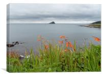 Wembury Flowers and Mewstone, Canvas Print