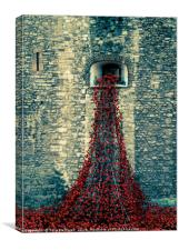 Pouring poppies, Canvas Print