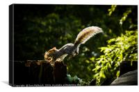 Nesting squirrel , Canvas Print