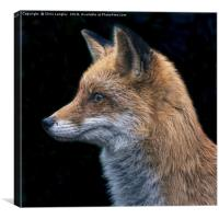 Le Renard Rouge - The Red Fox., Canvas Print