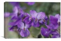 Beautiful violets on a grass bank.              , Canvas Print