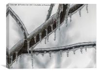 Icy Branch, Canvas Print