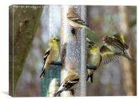 Goldfinches at the Feeder, Canvas Print