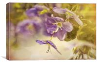 Speedwell - Veronica botanical, Canvas Print