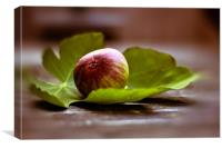 Fig on sheet, Canvas Print