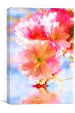Cherry blossoms on the water , Canvas Print