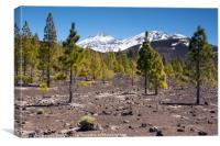 El Teide: Lava Fields and Trees, Canvas Print