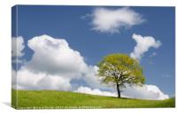 Tree on the Hill, Canvas Print