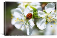 Ladybird Heaven, Canvas Print