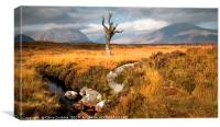 On Rannoch Moor # 2, Canvas Print