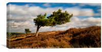 A windswept tree on Ramsley Moor, the Peak Distric, Canvas Print
